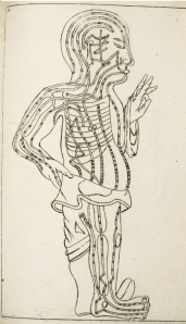 Drawing of the human body showing acupuncture meridians